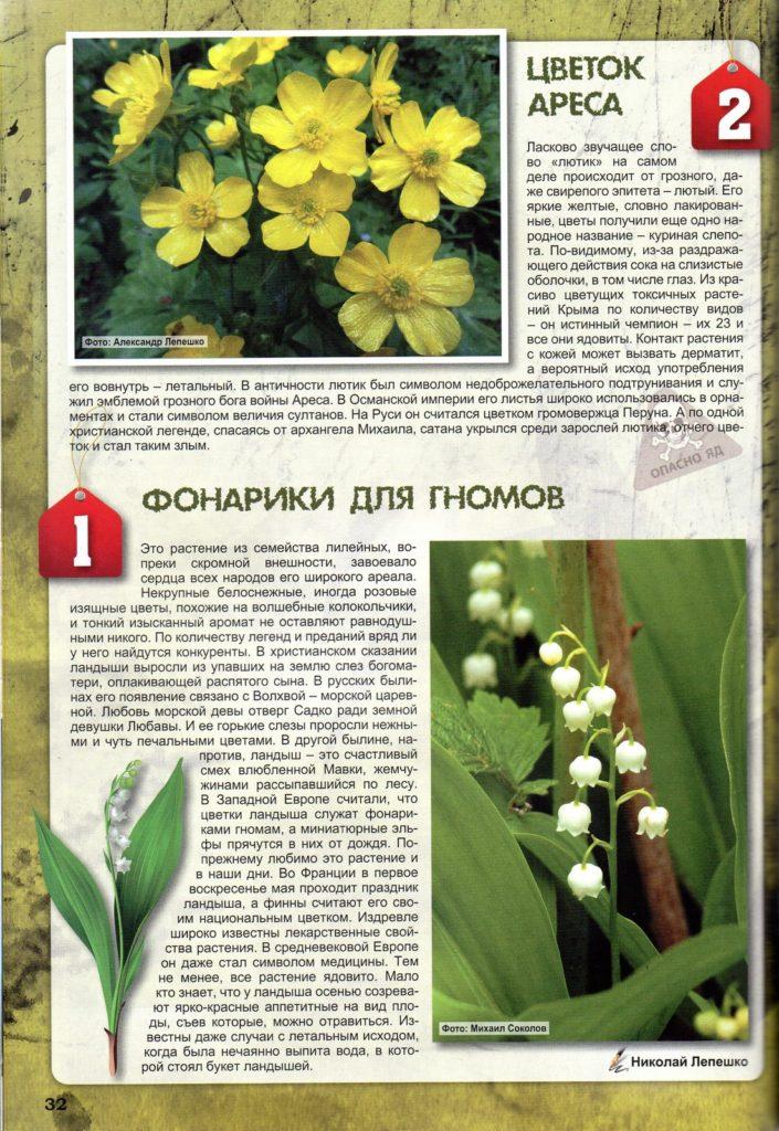 Фрагмент статьи 10 самый опасных растений Крыма с цветком ландыша