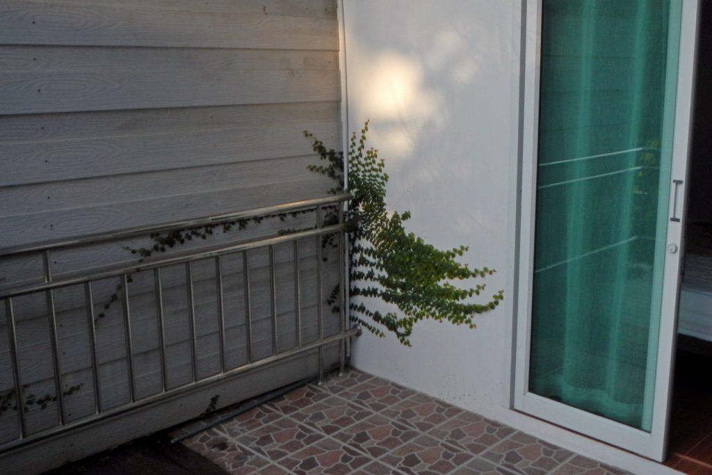 вьющееся растение закрепилось на стене