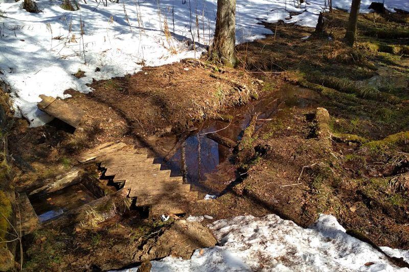 Оттаявший весной родничок с вытекающим из него ручьём среди снегов в весеннем лесу в Порошино