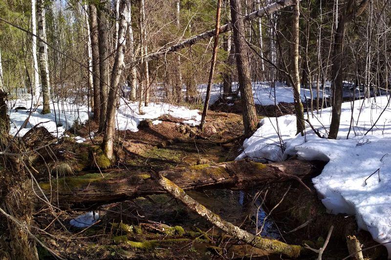 Оттаявший весной ручеёк среди снегов в весеннем лесу в Порошино