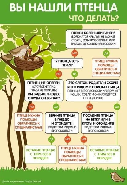 Что делать если вы нашли птенца