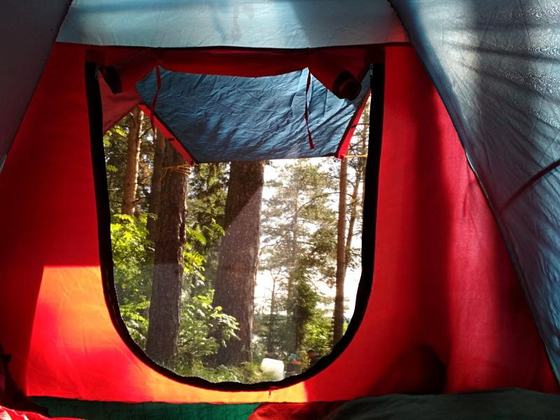 Утренний вид из палатки на освещенный солнцем сосновый лес