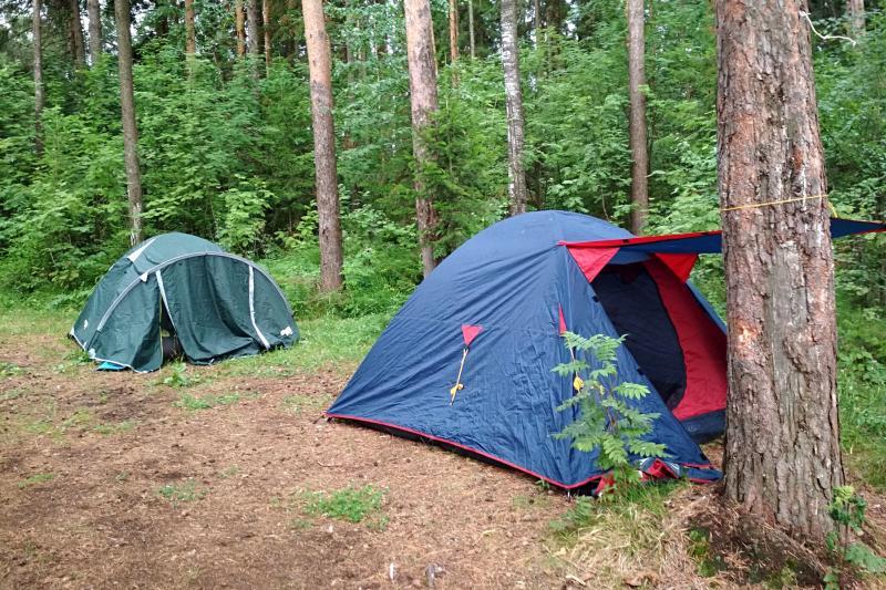 Палатки на ночёвке в сосновом лесу