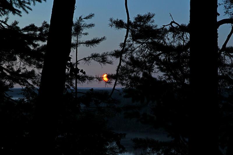 Оранжевая луна сквозь ветки сосен над рекой Вяткой