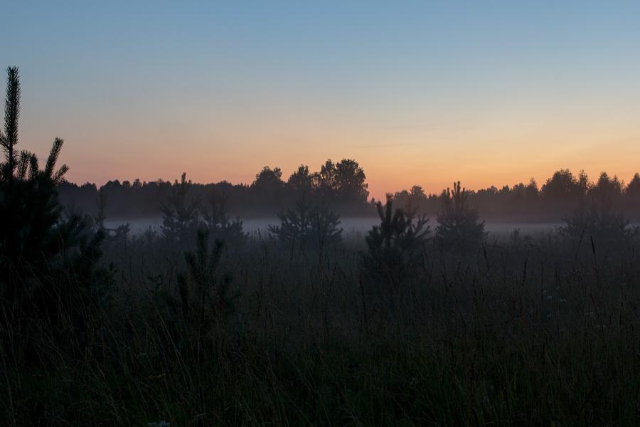 Маленькие сосенки в тумане. Поздний вечер, закат, туман опускается на луга в верховьях Вятки недалеко от Кирса