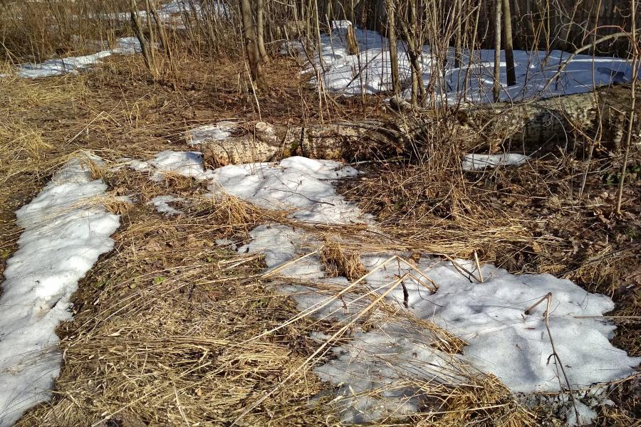 Природа в апреле: проплешины снега среди прошлогодней пожухлой травы