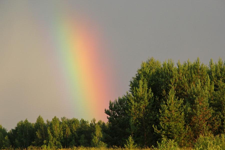Большая яркая радуга над деревьями