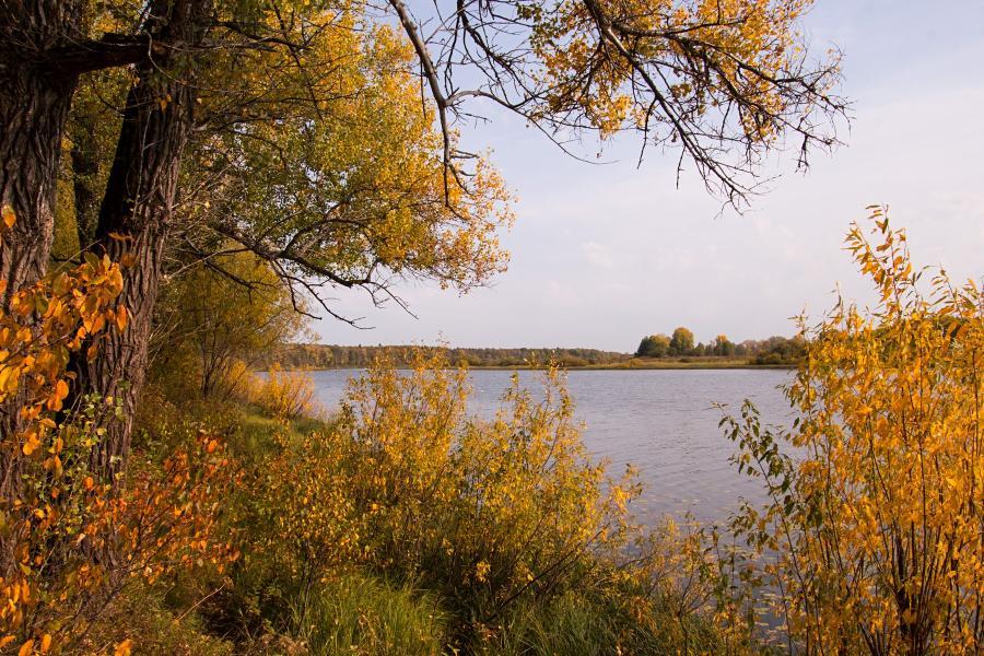 Золотая осень в заповеднике Нургуш: дуб и кусты на берегу озера