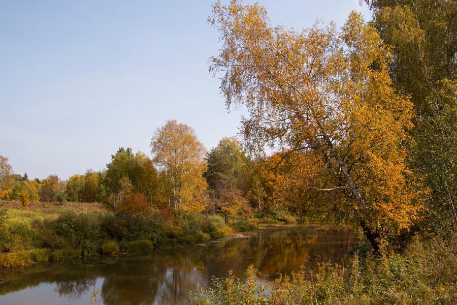 Золотая осень в заповеднике Нургуш: наклонившаяся пожелтевшая берёза на берегу старичного озера