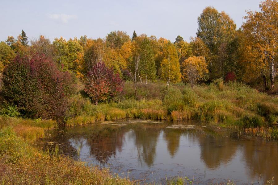 Золотая осень в заповеднике Нургуш: жёлтая и багряная листва деревьев на берегу заросшего старичного озера