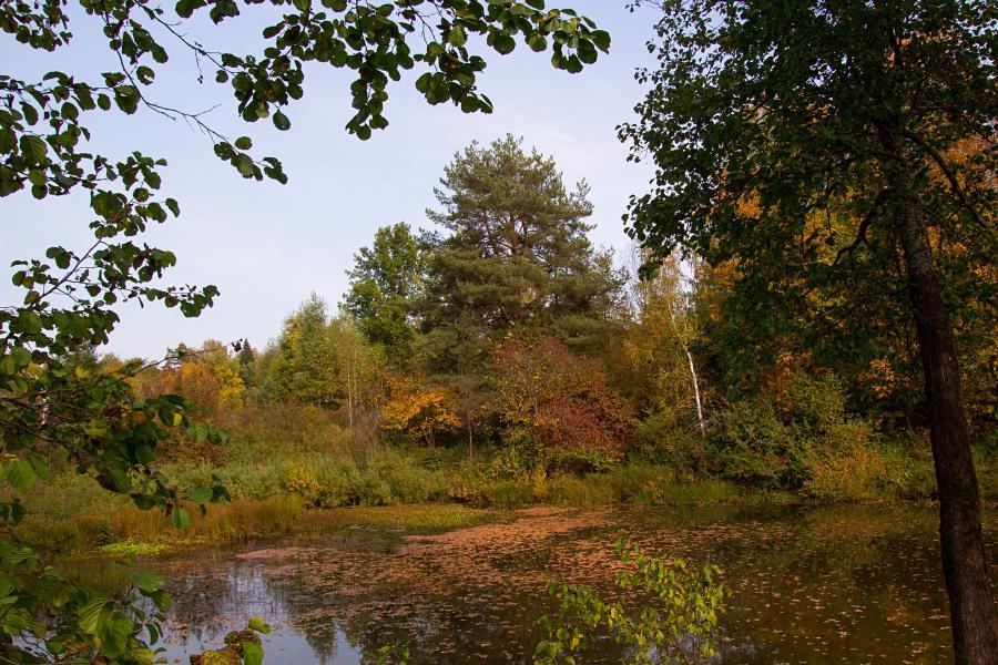 Золотая осень в заповеднике Нургуш: усыпанная сброшенными листьями глад озера