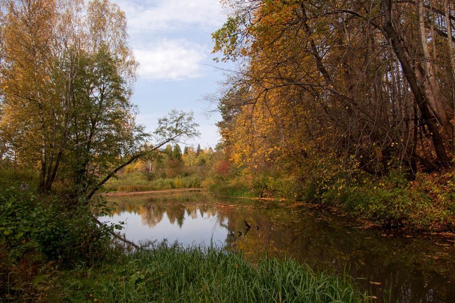 Золотая осень в заповеднике Нургуш: старичное озеро и сбросившие листья деревья