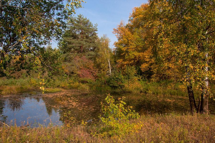 Золотая осень в заповеднике Нургуш: пожелтевшие берёзы и дубы на берегу усыпанного листьями старичного озера