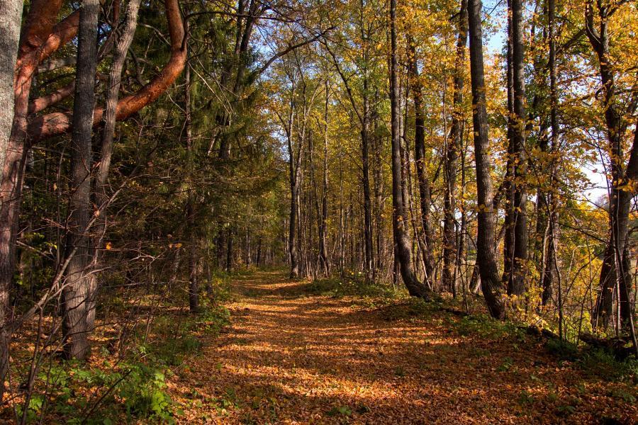 Золотая осень в заповеднике Нургуш: усыпанная шуршащими листьями тропинка в дубово-липовом широколиственном лесу