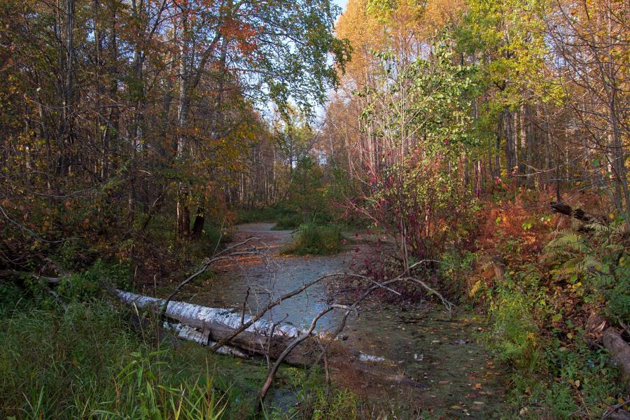Золотая осень в заповеднике Нургуш: зарастающее болотце и осенняялиства деревьев