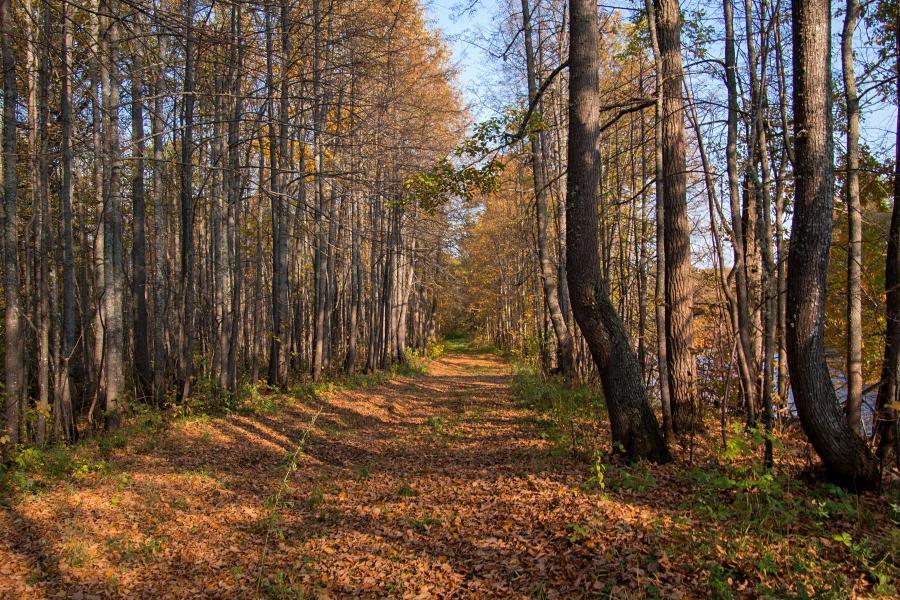 Золотая осень в заповеднике Нургуш: усыпанная опавшими листьями дорога в липовом лесу