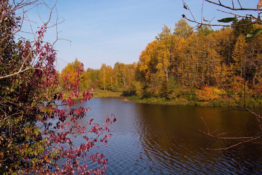 Золотая осень в заповеднике Нургуш: пожелтевшие деревья на берегу озера Нургуш