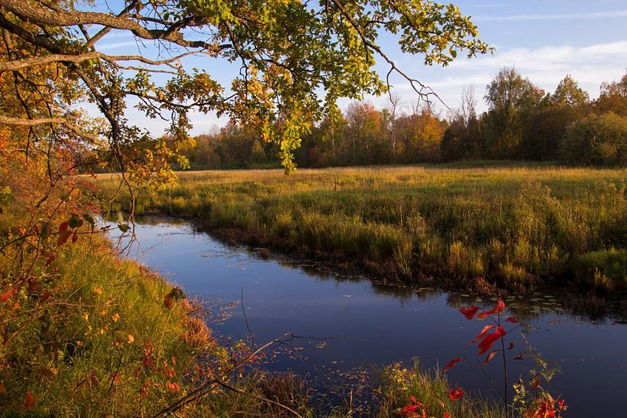 Золотая осень в заповеднике Нургуш: осенний дуб на берегу болотца в вечерних лучах