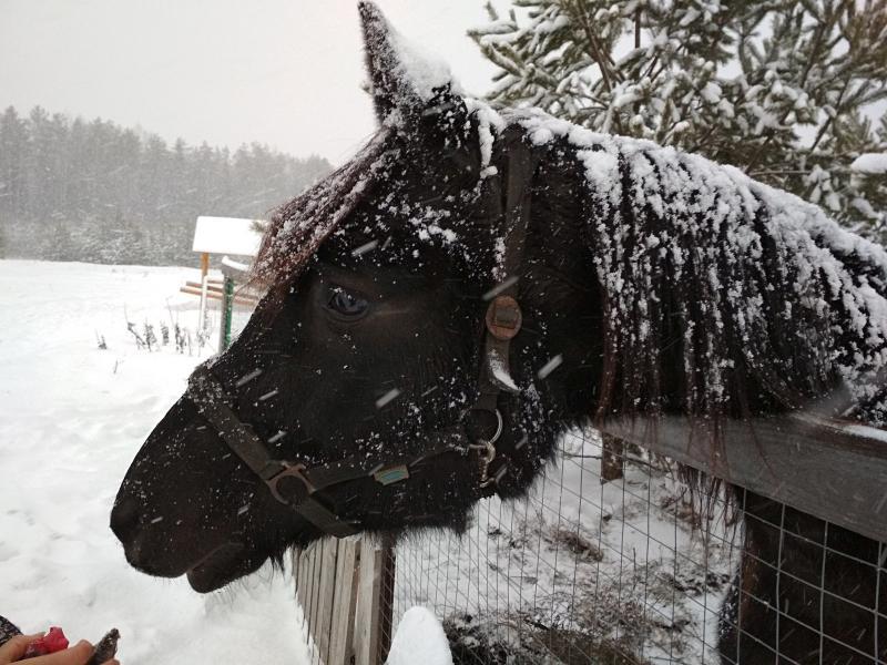 Лошадь в хаски-центре Умка