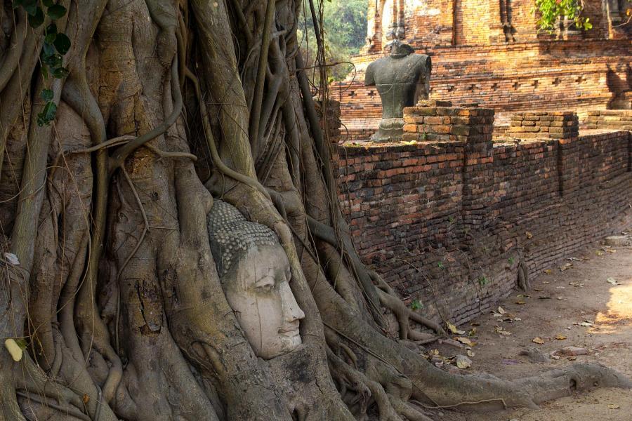 Голова Будды в корнях дерева (Храм Пхра-Махатхат, Аюттайя, Таиланд, январь 2015) - фотовыставка «С камерой по миру»