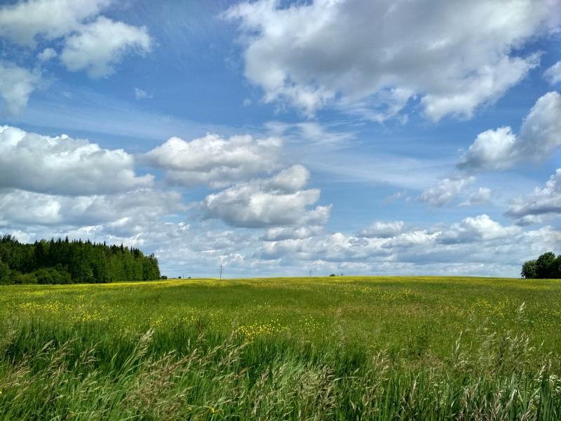 Облака над цветущими полями в летний день - поход выходного дня в Первомайский, Слободской район