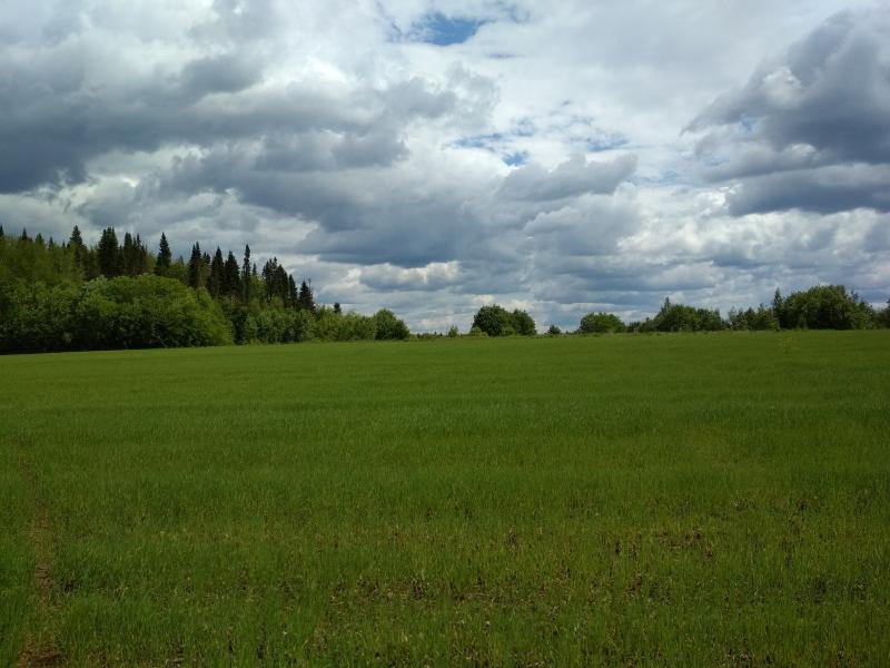 Пушистое зелёное поле - поход выходного дня в Первомайский, Слободской район