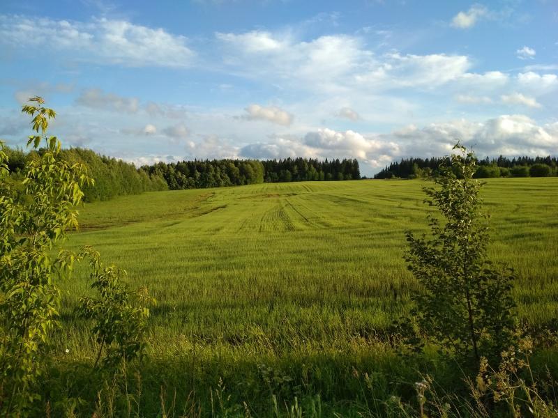 Молодые зелёные поля - поход выходного дня в Первомайский, Слободской район