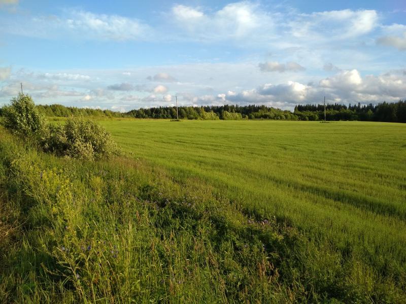 Зелёные поля в свете вечернего солнца - поход выходного дня в Первомайский, Слободской район