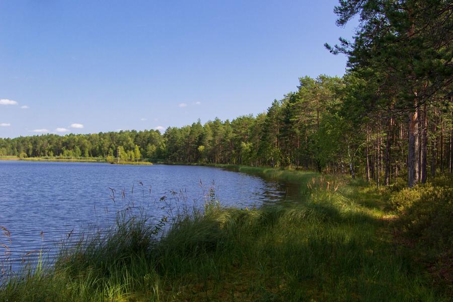Озеро Орловское - гидрологический памятник природы Кировской области, находится в Кумёнском районе, в лесах на другой стороне реки Ивкины, напротив санатория Сосновый бор