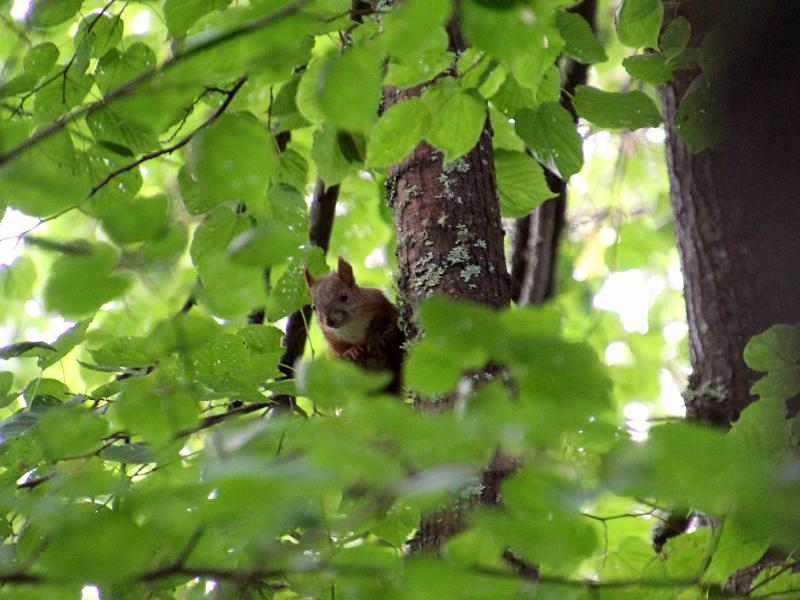 Белочка наблюдает за нами с высокого дерева