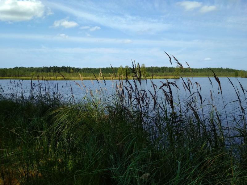 Берег озера Орловское