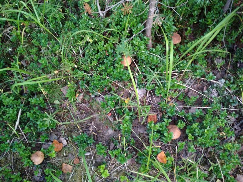 5 белых грибов в одном кадре