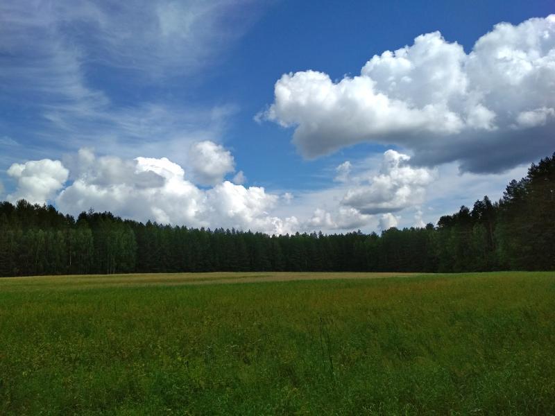 Облака над полем в лесу