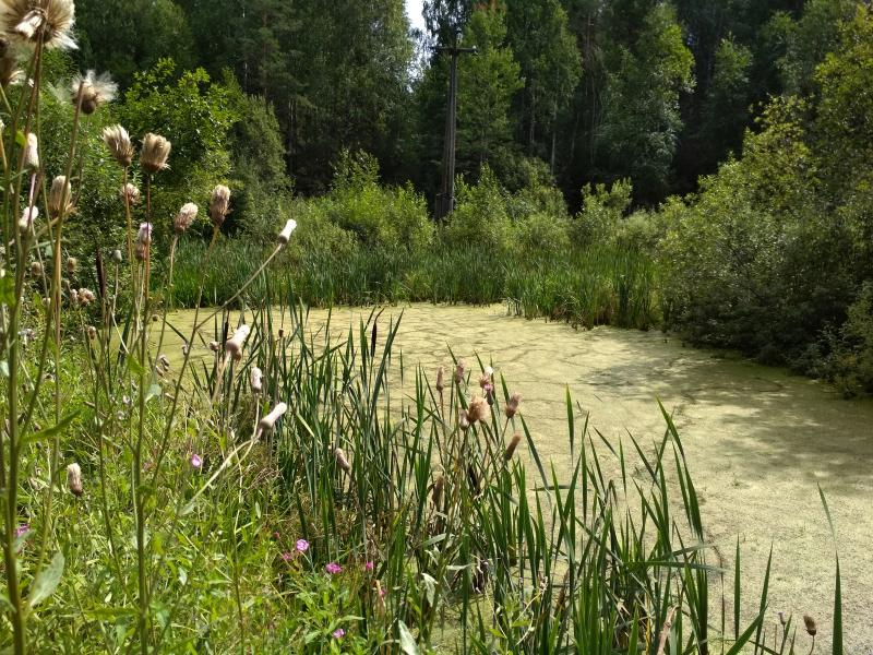 Заросшее зелёное болотце