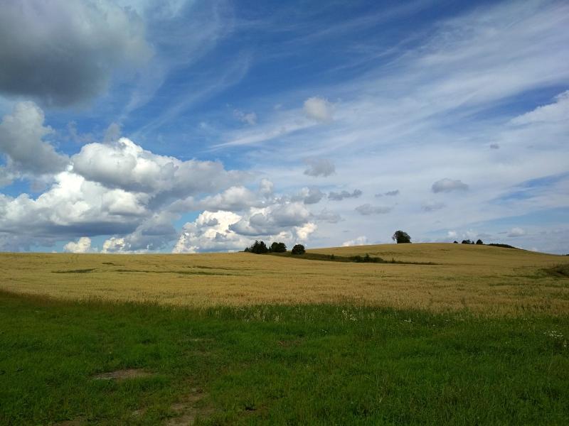 Жёлтые поля на холмах, зелёные луга и небо с облаками