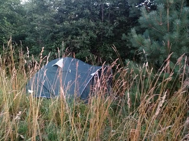 Палатка, спрятанная у сосенок