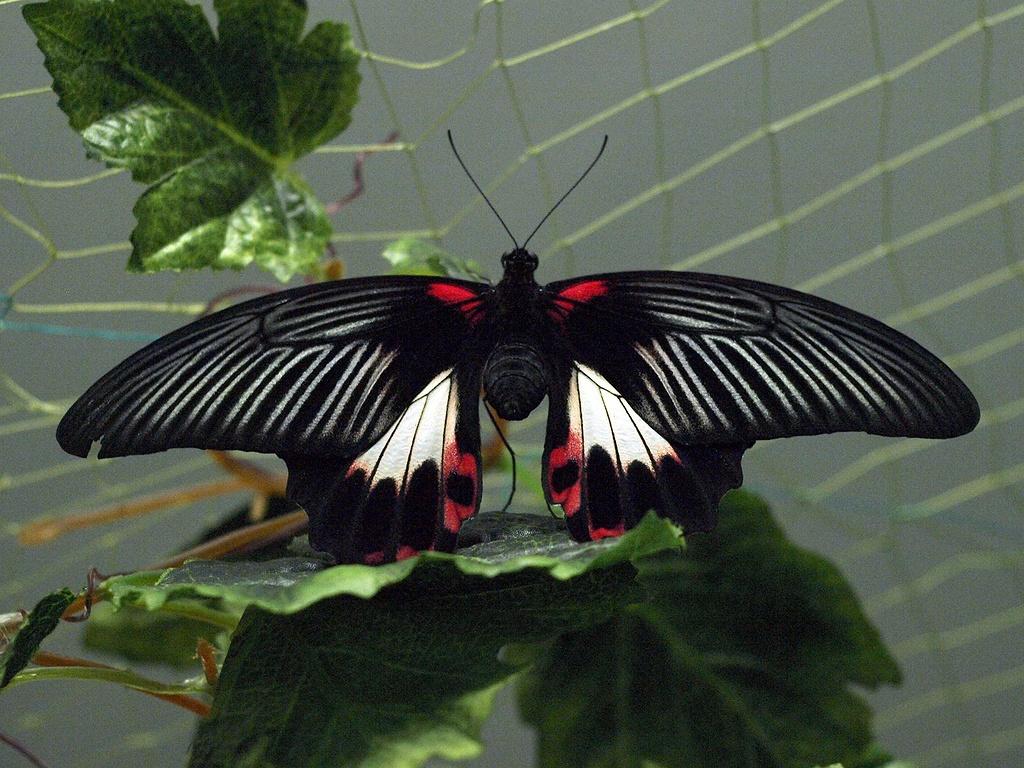 Выставка тропических бабочек в Вятской кунсткамере