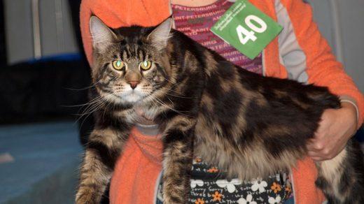 Выставка кошек «Кубок Вятки 2011»