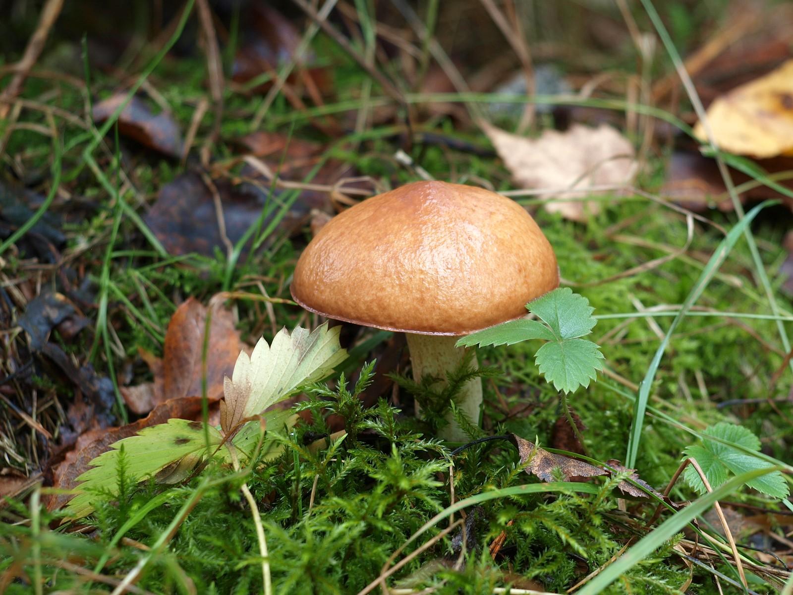 Сентябрьские грибы рыжиковой опушки