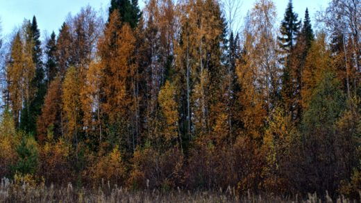 Краски осеннего леса