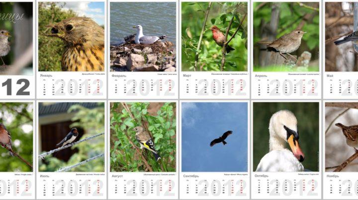 Календарь «Птицы 2012»
