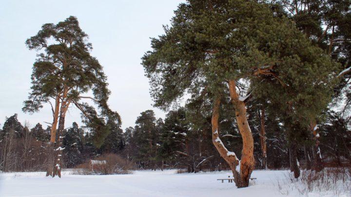 Лыжная прогулка по Заречному парку