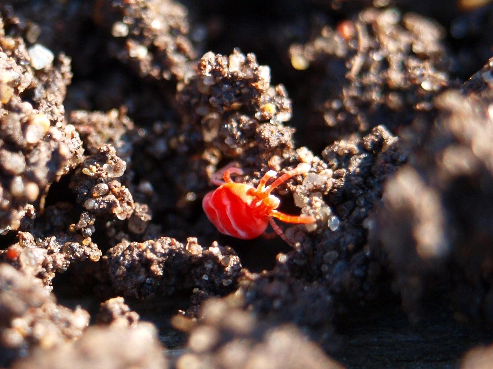 Жители забора, паучьи консервы и красный земляной клещик