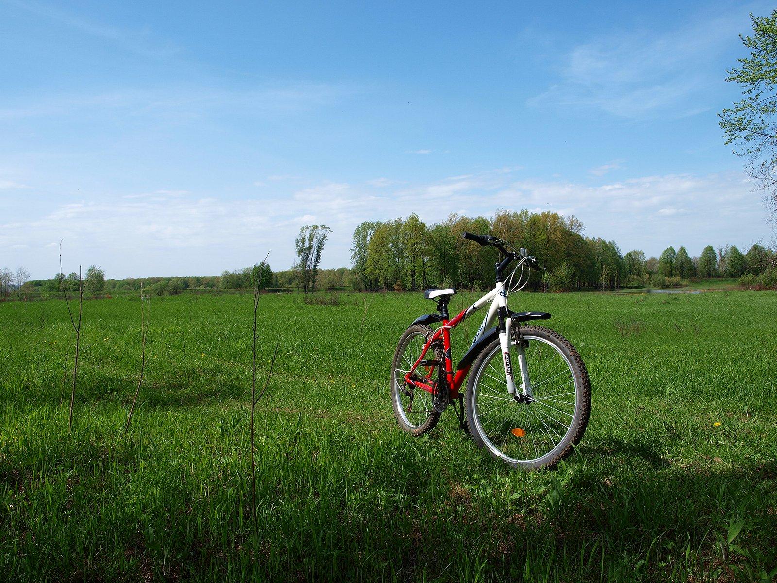 Велопрогулка по дубовой роще за Красным Химиком