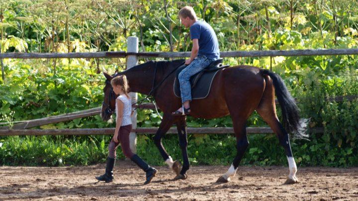 Конь живой и конь стальной