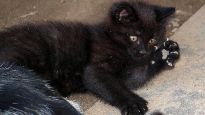 Половодье 2012: кошки спасателей