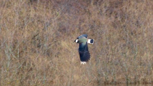 Половодье 2012: птицы и звери разлившейся Вятки