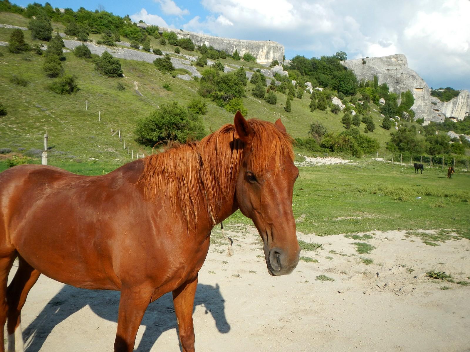 Лошади в Эски-Кермен