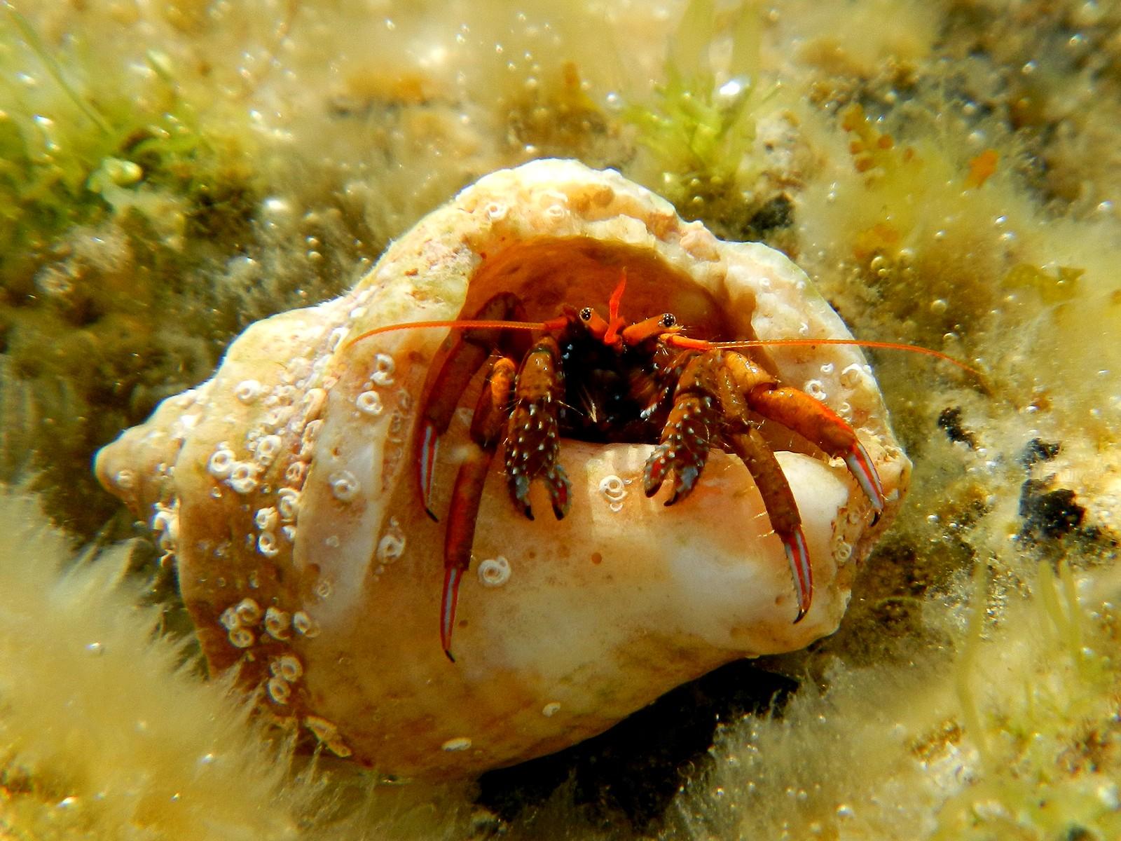 Омега. Подводный мир.