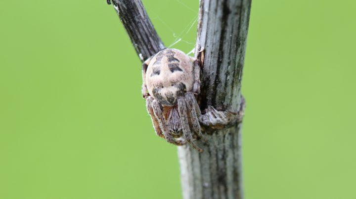 Затаившаяся смерть: пауки в засаде. Часть 1